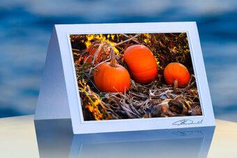 3 Fileld Pumpkins_prod