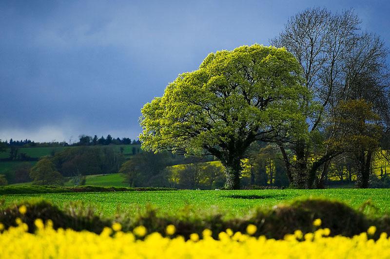 Springtime in Ireland