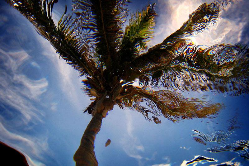 Underwater Palm