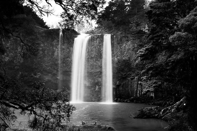 Whangrei Falls bw