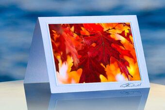 Autumn Oak Leaves_prod
