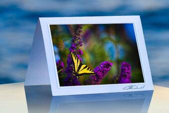 Butterfly Bush_prod
