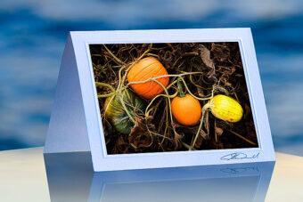 Field Pumpkins_prod