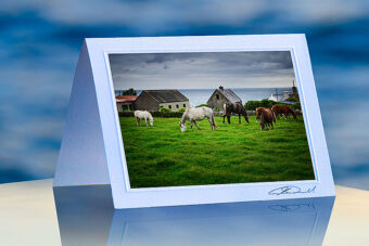 Irish Horses_prod