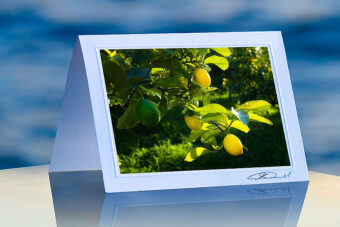 Lemons_prod