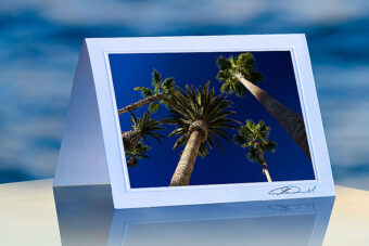 Majestic Palms_prod