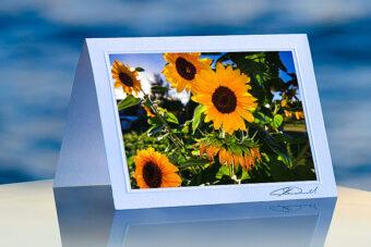 Sunflowers_prod