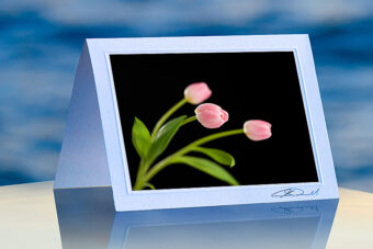 Three Pink tulips_prod