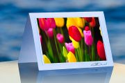 Tulip Flourish_prod