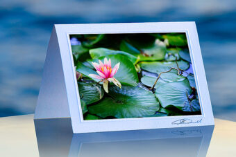 Water Lily_prod