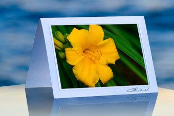 Yellow Lily_prod
