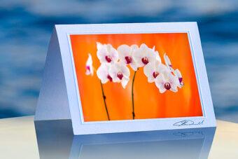 Orchid Burst_prod