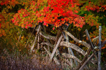 Crimson Fence