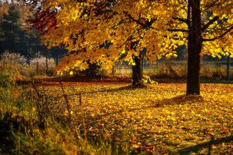Gilded Landscape