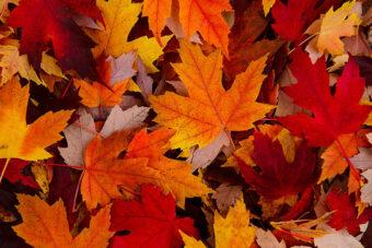 Spirited Leaves