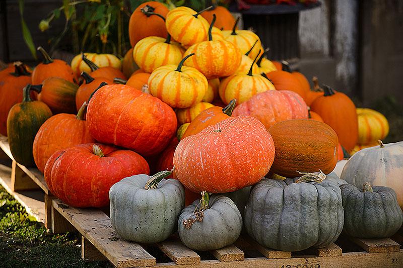 Pumpkin Shades
