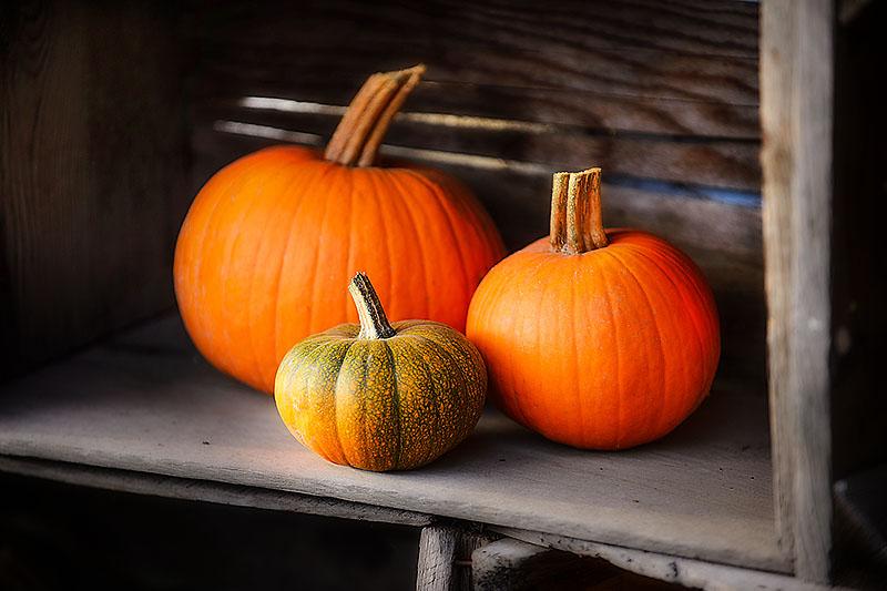 Triple Pumpkin