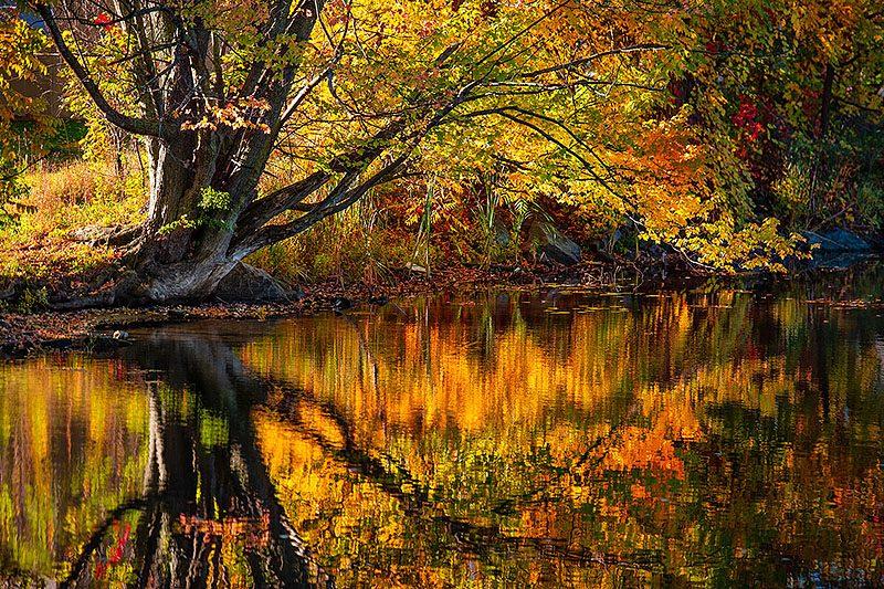 Graceful Reflection