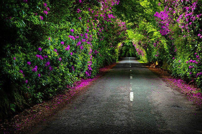 Blossom Way